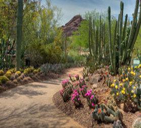 Desert Botanical Garden. 1201 N Galvin Pkwy Phoenix, AZ 85008