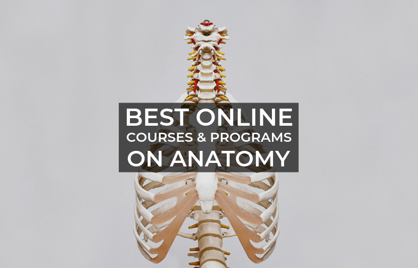 Best Online Courses And Programs On Anatomy